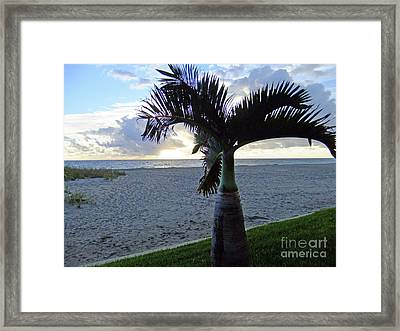 Palm In The Morning Framed Print