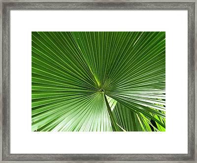 Palm Leaf II Framed Print