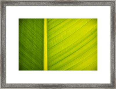 Palm Leaf Macro Abstract Framed Print