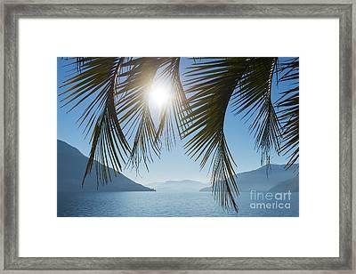 Palm Leaf Framed Print by Mats Silvan