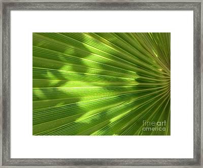 Palm Leaf Framed Print by Nora Boghossian