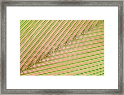Palm Leaf, Sarapiqui, Costa Rica Framed Print by Panoramic Images