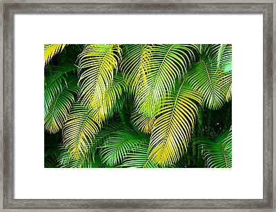 Palm Leaves In Green And Gold Framed Print by Karon Melillo DeVega