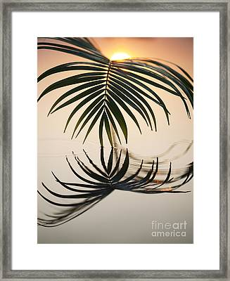 Palm Light Framed Print