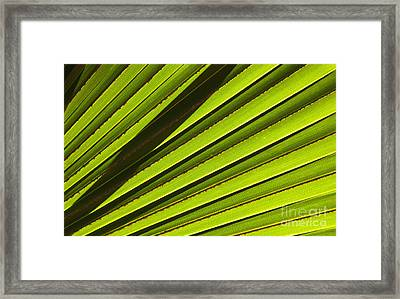Palm Lines Framed Print by Mike  Dawson