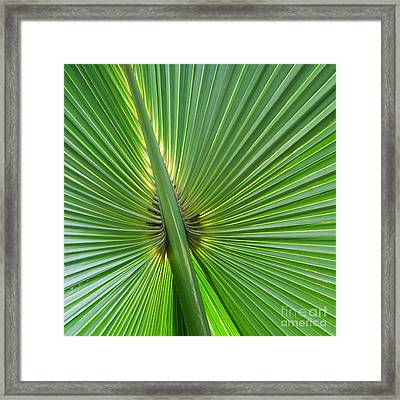 Framed Print featuring the photograph Palm Love by Roselynne Broussard