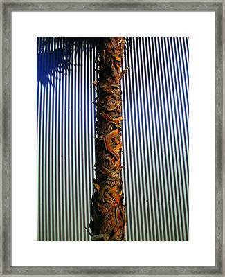 Palm On Sheet Metal Framed Print by Randall Weidner
