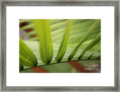 Palm Framed Print by Paul Cammarata