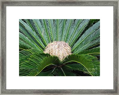 Palm Plant Framed Print by Val Miller