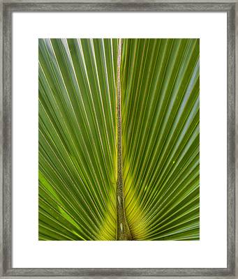 Palm Reader Framed Print