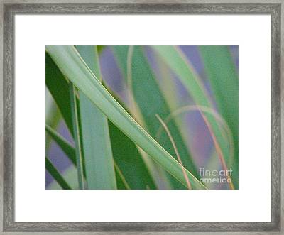 Palm Reeds Framed Print by Val Miller