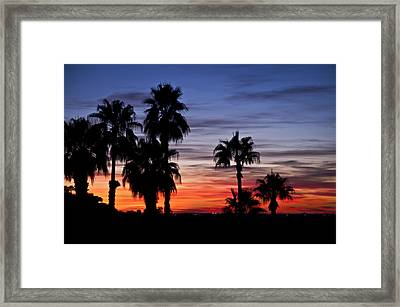 Palm Shadows Framed Print