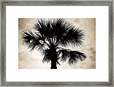 Palm Sihlouette Framed Print