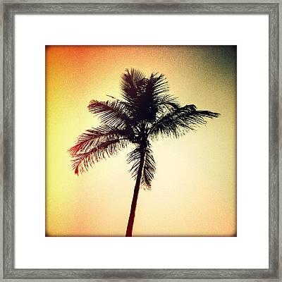 Palm Silhouette Sunset Framed Print