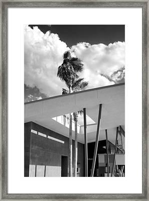 Palm Springs Animal Shelter Palms Bw Palm Springs Framed Print