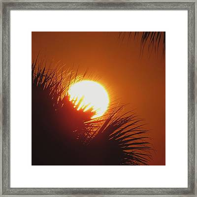 Framed Print featuring the photograph Palm Sunday by Nikki McInnes