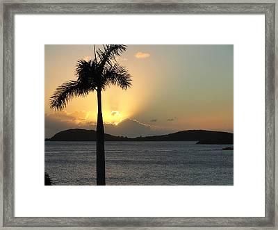 Palm Sunset Framed Print