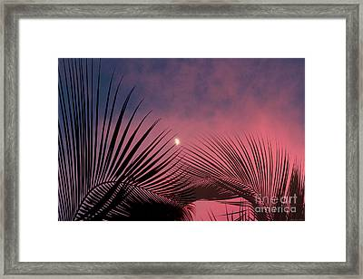 Palm Sunset Framed Print