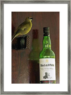 Palm Tanager And Whisky Bottle Framed Print