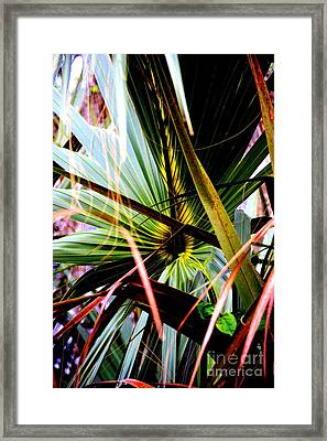 Palm Through The Fronds Framed Print