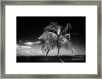 Palm Tree Against Blue Sky Islamorada Florida Keys Usa Framed Print by Joe Fox