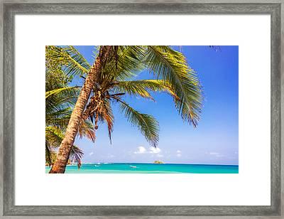 Palm Tree And Caribbean Framed Print by Jess Kraft