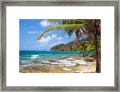 Palm Tree And Caribbean Sea Framed Print by Jess Kraft