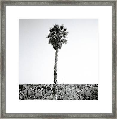 Palm Tree And Graffiti Framed Print by Shaun Higson