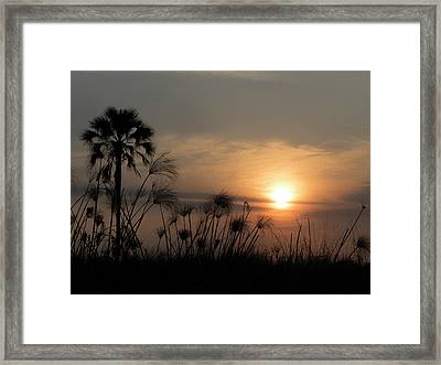 Palm Tree And Papyrus Plants At Dusk Framed Print