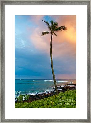 Palm Tree At Sunset. Framed Print