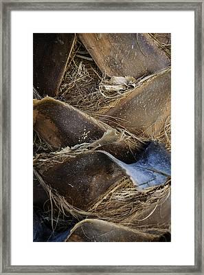 Palm Tree Bark Framed Print