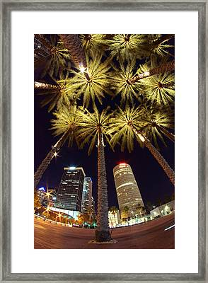 Palm Tree Fireworks Framed Print by Daniel Woodrum