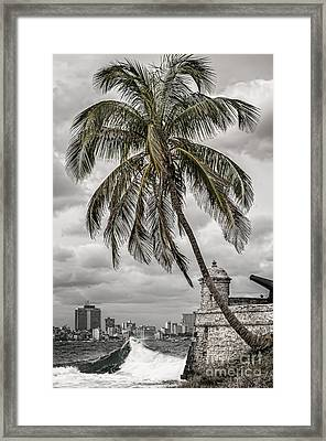 Palm Tree In Havana Bay Framed Print