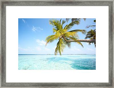 Palm Tree In The Maldives Framed Print