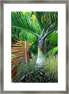 Palm Tree Inflorescence In The Rainforest  Framed Print by Karon Melillo DeVega