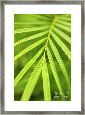 Palm Tree Leaf Framed Print