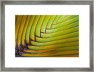 Palm Tree Leafs Framed Print by Sebastian Musial