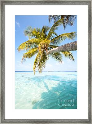 Palm Tree Leaning Over Water - Maldives Framed Print