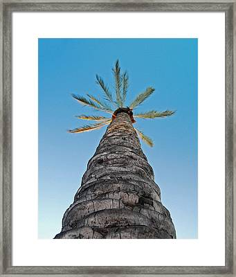 Palm Tree Looking Up Framed Print