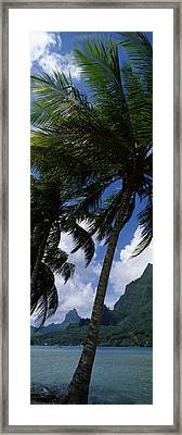 Palm Tree On Cooks Bay With Mt Mouaroa Framed Print by Panoramic Images