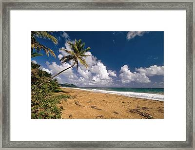 Palm Tree On Maunabo Beach Puerto Rico Framed Print by George Oze