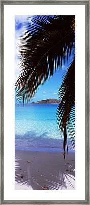 Palm Tree On The Beach, Maho Bay Framed Print