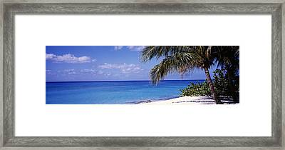Palm Tree On The Beach, Seven Mile Framed Print