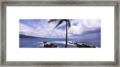 Palm Tree On The Coast, Honolulu Nui Framed Print by Panoramic Images