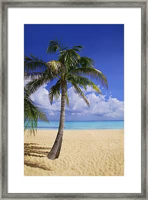 Palm Tree On Tropical Beach Framed Print by Don Hammond