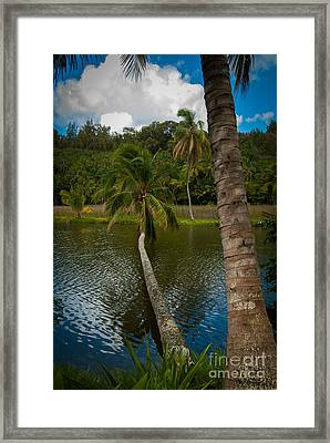 Palm Tree Over River Framed Print
