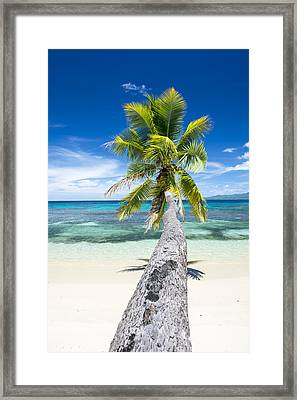Palm Tree Over Water Framed Print