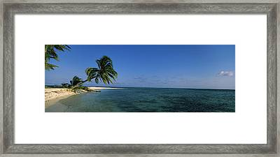 Palm Tree Overhanging On The Beach Framed Print by Panoramic Images