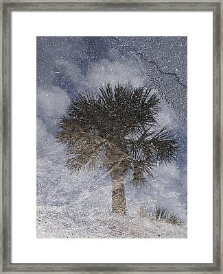 Palm Tree Reflection Framed Print by Michel Mata