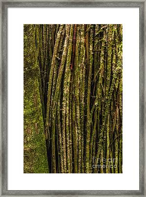 Palm Tree Roots 1 Framed Print by Al Andersen